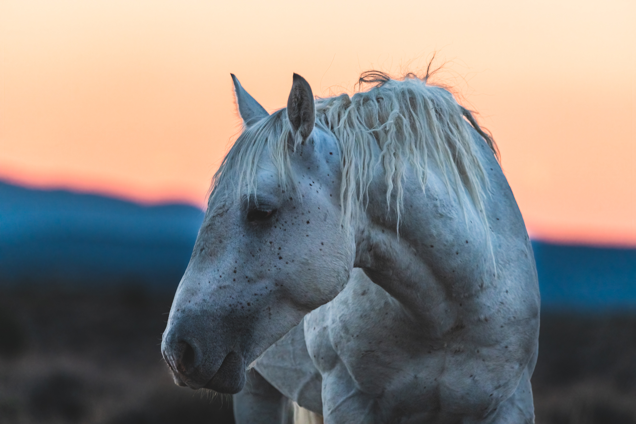 White Stallion at Sand Wash Basin