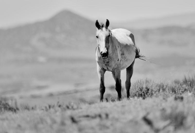 Wild Horse at Sand Wash Basin