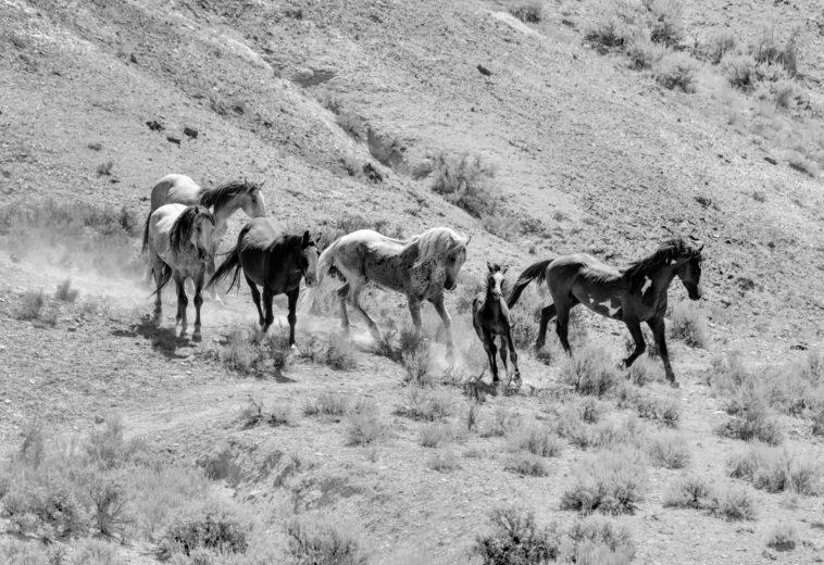 Sand Wash Horses at Sheepherder Springs